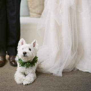 ★大切な家族の一員★愛犬とのガーデンリゾート挙式相談会