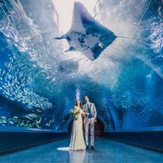 【VR体験◆水族館チケット付】大人気の水族館ウエディング相談会