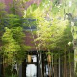 竹がお迎えするホテル玄関。Konayaホテルならではの特別な撮影ワンシーンが叶う。記念日となる大切な時を刻みます。