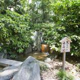 [水みくじ]御本殿の奥には涼しく水の流れる音が印象的な小さな池があります。「安産・万物成長・生田の森の守り神」生田森坐社も参拝しながら、水みくじを体験してみてください。