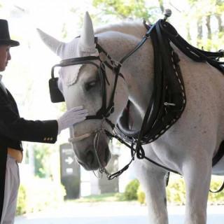 【限定企画】白馬の馬車体験つきフェア