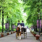 パレスハウステンボスへの参道は、馬車パレードにふさわしい並木道。 たくさんの方に祝福されて、ハウステンボスの街並みへ参ります。