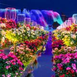 夜のイルミネーションとバラ祭のコラボレーションは、圧巻。