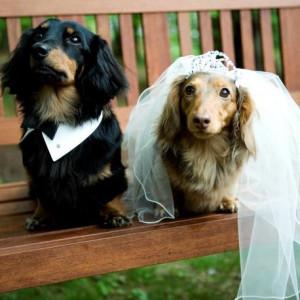 愛犬も参加OK! ペットと一緒のウエディングフェア