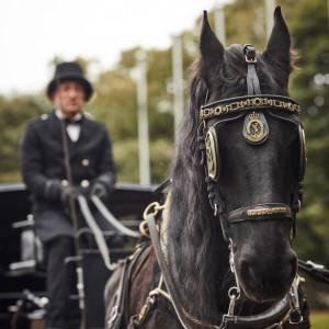 深い栗毛のフリージアンホースがヨーロッパの式典でも使用されるランドー馬車を牽引してロイヤルウエディングさながらのホースパレード|ウェスティンホテル東京の写真(4926809)