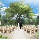 樹齢120年のオリーブがガーデン中央に新たに登場