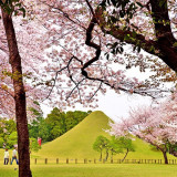 近接する水前寺成趣園(1)