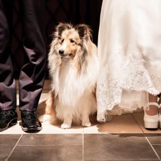 大好きなワンちゃん・ネコちゃんと叶える結婚式