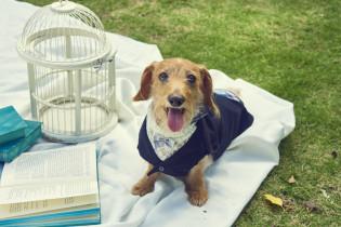 愛犬も参加のウエディング|ゲストハウス リッチモンドの写真(2635800)