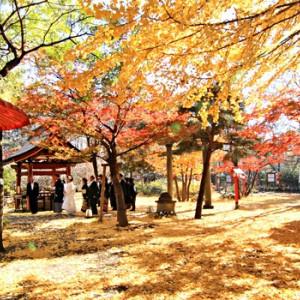 参進風景(秋) 冠稲荷神社 宮の森迎賓館 ティアラグリーンパレスの写真(267795)