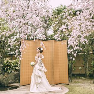 《京都ならでは舞妓さん演出特典付き》京懐石試食×和装試着体験