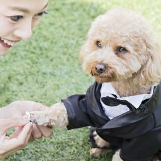 【ペット婚】大切なペットと一緒に叶えるウエディング♪