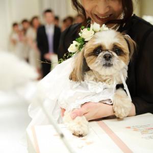 ワンちゃん♪ネコちゃん大集合♪ペットと一緒に参加型結婚式