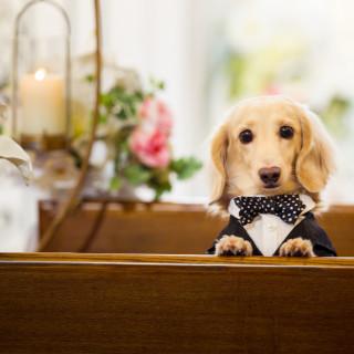 【WEDDING with PET♪】見学日から愛犬と一緒