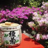 5月の初め頃は、中庭のツツジが満開に。