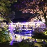 スカイツリーを手掛けた照明デザイナーによる日本庭園の照明をぜひ生でご覧ください