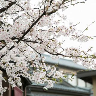 9月までに結婚式を挙げられる方限定!桜のお箸プレゼント!