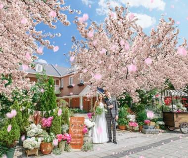 春には満開の桜のなかウェディングを♪