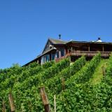 長野市から車で約40分、美しい丘の上に建つレストラン。ワインブドウが眼下に広がります。