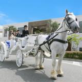白馬と馬車のシンデレラウエディング!ゲストの歓声が二人を包み込む♪