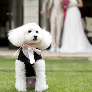 プライベートガーデンなら愛犬の参加もOK♪|ヴィラ・グランディス ウェディングリゾート 福井の写真(1433153)