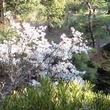 春の庭園 桜