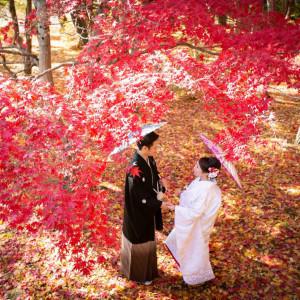 秋の人気フォト*紅葉でフォトウエディング衣裳試着×相談会