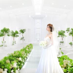 #即決花嫁続出#グリーンコーデ#ナチュラル演出|SHOHAKUEN HOTEL 松柏園ホテルの写真(6823752)