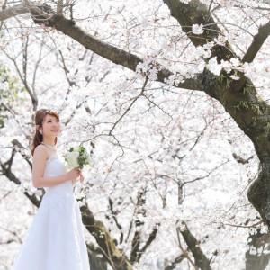 桜ロケーション撮影 遠出せず近隣の公園でも桜との撮影可 チャペルクレール 奈良店の写真(1460294)