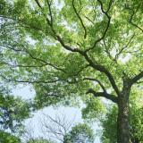 そびえ立つ楠は樹齢100年を超えるナンザンハウスのシンボルツリー。何年経っても帰って来られる変わらない景色がここにあり続ける