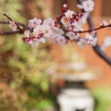 季節のおもてなしに庭の草花は欠かせない存在。