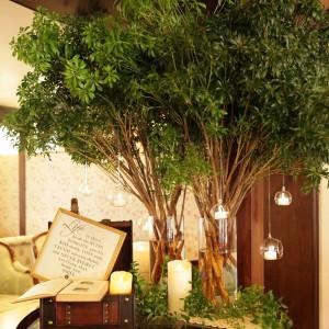 本物の木をアレンジしたディスプレイも人気|グランシェル・ルミエール (GRAND-CIELグループ)の写真(2834673)