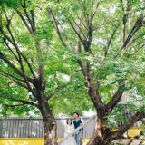 青いナポリのシンボルツリー