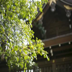 四季折々の風景が楽しめるのも神社ならでは!|若宮の杜 迎賓館の写真(4444998)
