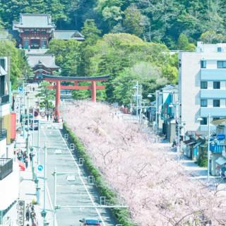 ~心うるおす四季の景色を思い出に~鶴岡八幡宮見学ツアー