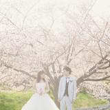 満開の桜の中での幻想的な1枚
