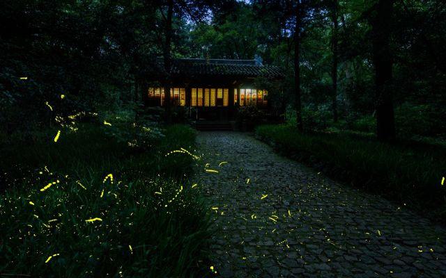 ホタルの光でロマンチックな初夏を過ごす! ホタル鑑賞しながら食事ができるレストラン