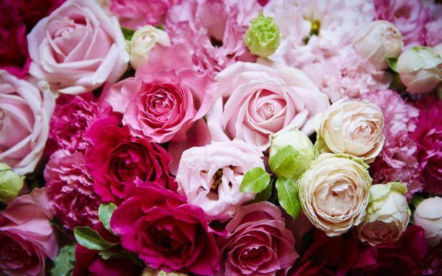 薔薇の花言葉知ってる?本数や色で意味が違う薔薇の花