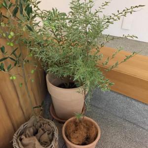 チャペル内の植物は一部本物です。|162389さんのEnFance(アンファンス)の写真(411222)