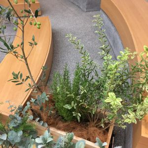 オリーブの木|162389さんのEnFance(アンファンス)の写真(411221)