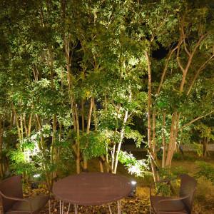 夜だったが常緑樹でライトアップも綺麗|486949さんのプレシャスガーデン セントクロワールの写真(554824)