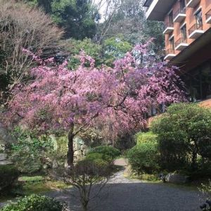 お庭には自然が溢れていました。|487338さんのハイアット リージェンシー 京都の写真(552499)