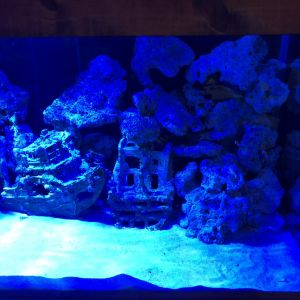 アクアリウムに藍い光が当たるとより幻想的です|505806さんのグラン・サウスオーシャンズの写真(645156)