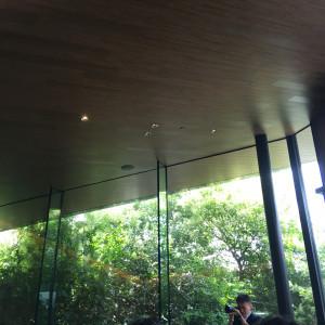 自然の光が木にあたってきれいです。|505946さんのTRUNK(HOTEL)の写真(820359)