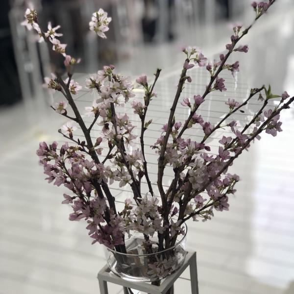 季節に合わせて桜の木でお出迎えしてくれた、