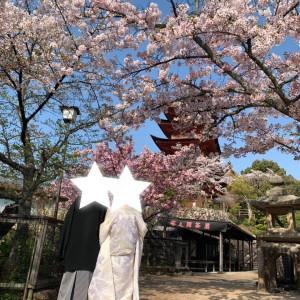 桜の時期おすすめです|532943さんの厳島神社の写真(961279)