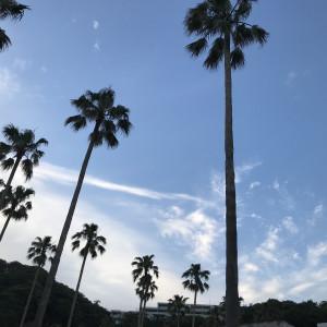 ヤシの木に囲まれ、リゾート気分 533112さんのシーサイド リビエラの写真(785393)