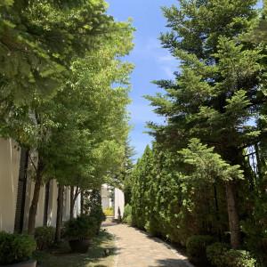 ホワイトハウスまでの道|533478さんのガーデンヒルズ迎賓館(松本)の写真(788092)